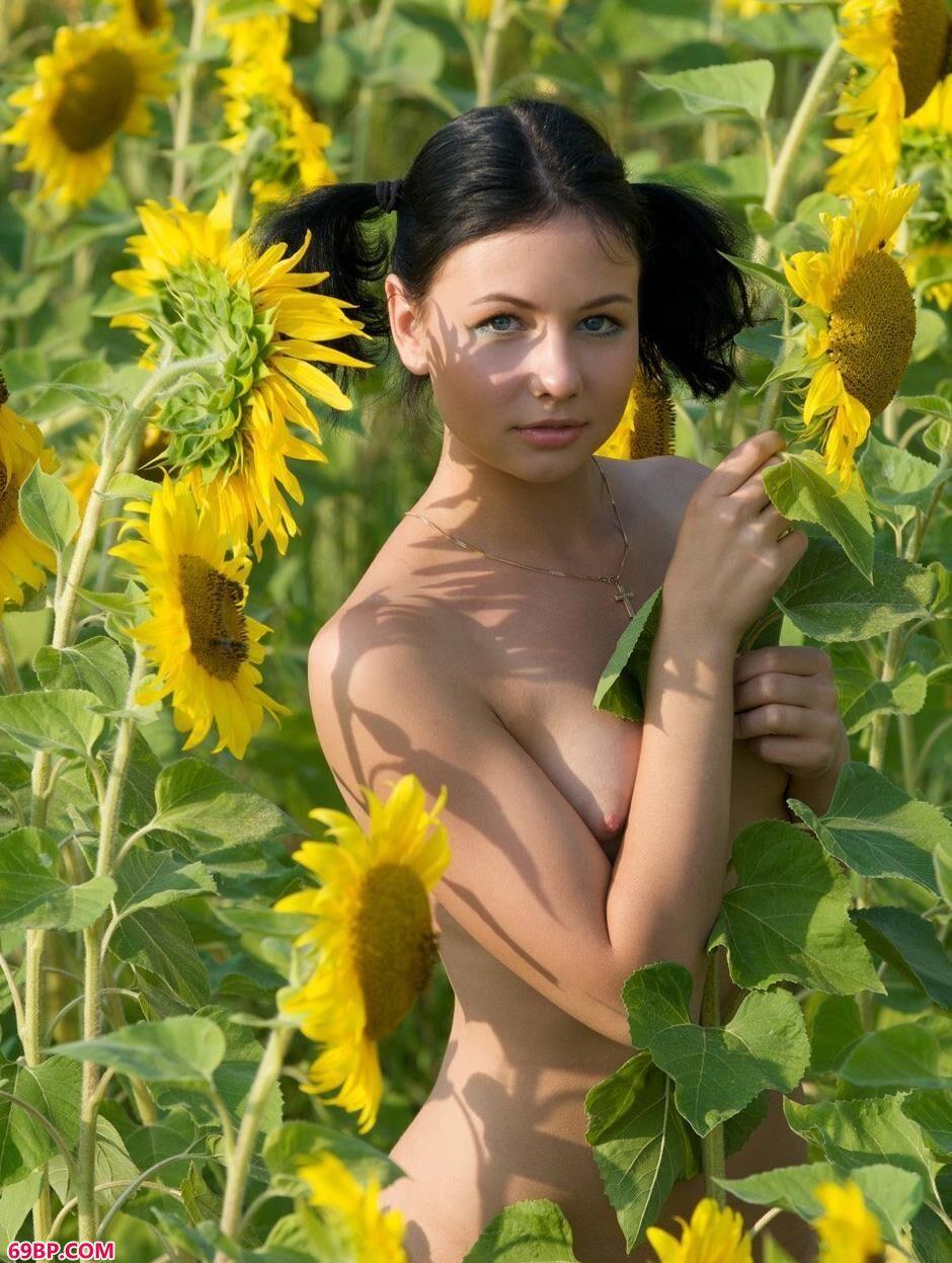 裸模艾拉和滨海在向日葵花海李的美丽人体1